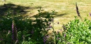 garden in ashcombe