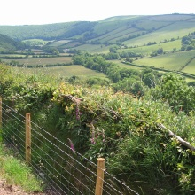An Exmoor Hedgerow