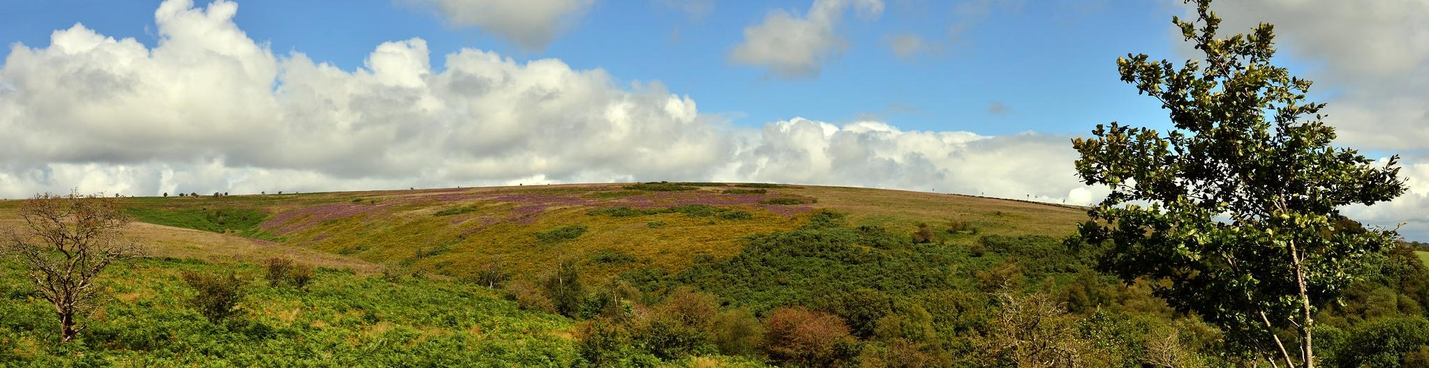 Molland Moor