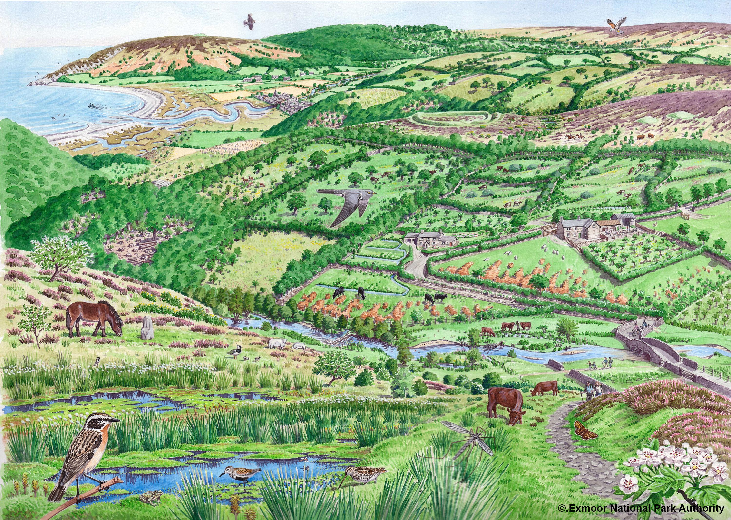 Exmoor-nature-in-recovery.jpg