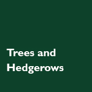 Trees and Hedgerows
